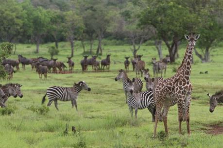 WWF cảnh báo một nửa số di sản thiên nhiên thế giới đang bị đe dọa