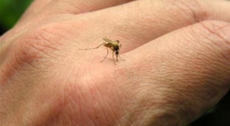 Đà Nẵng phản hồi về thông tin có muỗi truyền bệnh Zika tại sân bay