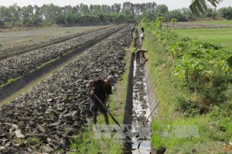 Gian nan với bài toán chuyển đổi cây trồng trên đất lúa ở đồng bằng sông Cửu Long