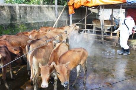Triển khai tháng vệ sinh, tiêu độc khử trùng môi trường