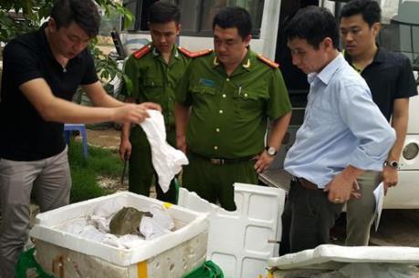 Bắt giữ hơn 200 kg ba ba cùng nhiều hàng hóa Trung Quốc nhập lậu
