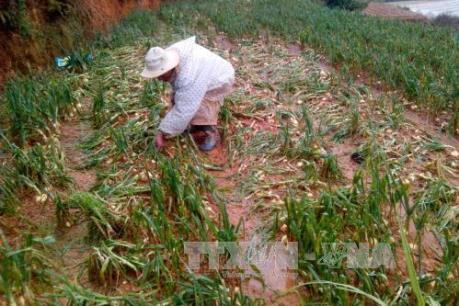 Mưa đá và lốc xoáy gây thiệt hại nặng nề cho Điện Biên