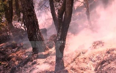 Biến đổi khí hậu: Nhiều địa phương có mức cảnh báo cháy rừng cực kỳ nguy hiểm