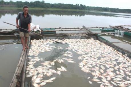 Biến đổi khí hậu: Cá nuôi chết hàng loạt tại Lâm Đồng do nắng nóng