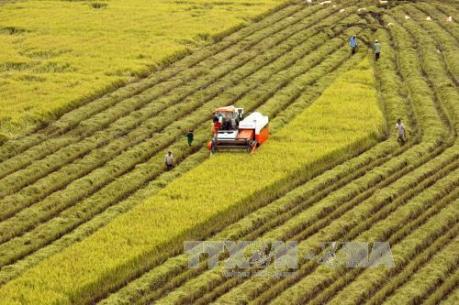 Nông nghiệp Việt Nam sẽ được hưởng lợi từ TPP