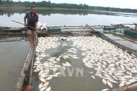 Làm rõ nguyên nhân cá chết hàng loạt ở ven biển miền Trung