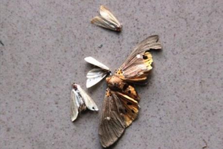 Cách phòng tránh côn trùng di trú gây mẩn ngứa