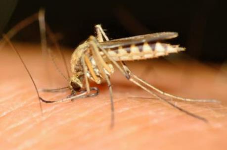 """WHO: 6 quốc gia châu Phi có thể """"xóa sổ"""" bệnh sốt rét vào năm 2020"""