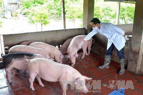 Đừng để mất hình ảnh ngành chăn nuôi