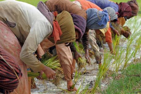 Campuchia triển khai biện pháp đối phó hạn hán