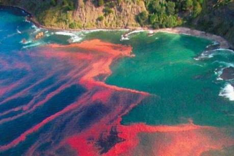 Thủy triều đỏ làm chết hàng tấn ngao ở Chile