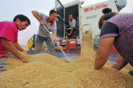 An ninh lương thực của Trung Quốc ở mức báo động