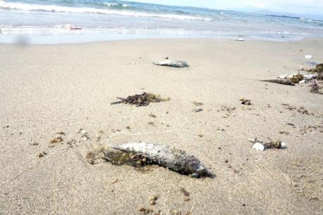 Sẽ công bố kết quả kiểm nghiệm sự cố cá chết bất thường ở miền Trung vào đầu tháng 9