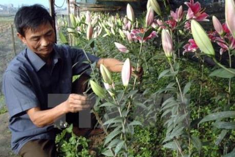 Liên kết kinh doanh hoa tươi: Mắt xích còn lỏng lẻo