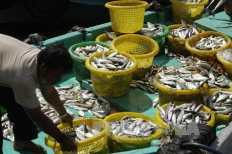 Bộ Công Thương lập đường dây nóng hỗ trợ thu mua thủy hải sản