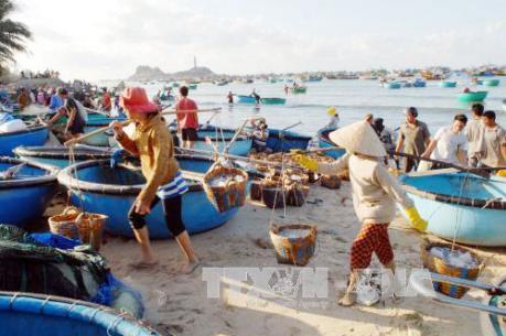 Hỗ trợ khẩn cấp người dân thiệt hại do hải sản chết bất thường