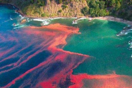 Chile thiệt hại hàng triệu USD mỗi ngày do thủy triều đỏ