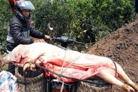Cao Bằng xử lý cơ sở giết mổ lợn chết