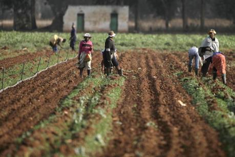 Hợp tác xã - Mô hình quan trọng phát triển nông nghiệp châu Phi