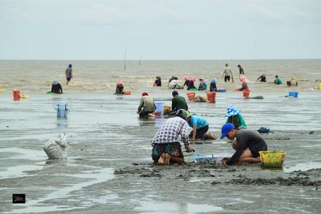 Thái Bình: Không có chuyện hải sản chết trôi dạt vào bờ biển Cồn Vành