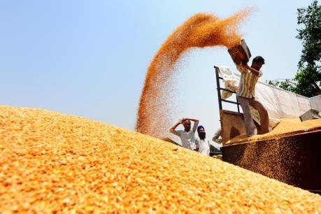 Sản lượng gạo châu Á sụt giảm mạnh