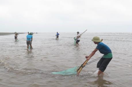 Xử lý việc đưa thông tin không chính xác về hải sản chết tại biển Cồn Vành