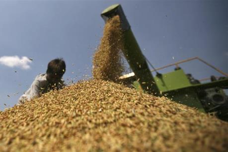 Giá lương thực thế giới tăng nhẹ trong tháng Tư