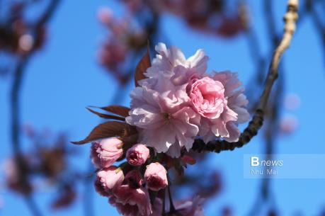 Mùa Xuân nước Anh đẹp dung dị