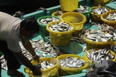 Chỉ định 4 ngân hàng cho vay thu mua tạm trữ hải sản