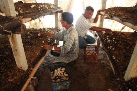 Độc đáo cách người Thái Lan thích ứng với biến đổi khí hậu (P2)