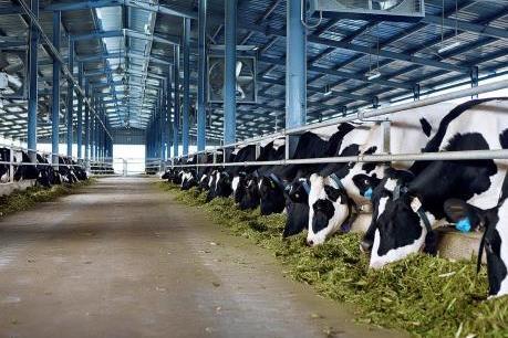 Tìm thị trường cho sản phẩm chăn nuôi an toàn