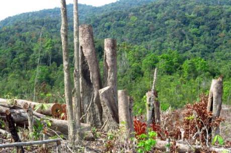 Kon Tum đã xác minh được các đối tượng phá rừng ở Đăk Glei
