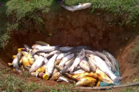 Cá nuôi trên sông Bưởi lại chết trắng lồng