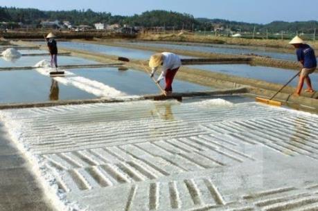 Đã có kết quả phân tích muối sản xuất ở miền Trung