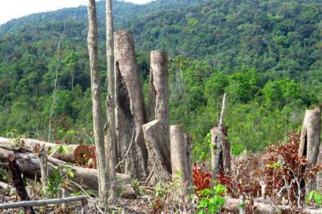 Phá rừng tại Phú Yên gia tăng