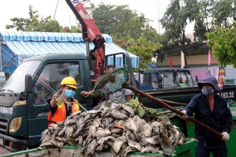 Đã xử lý xong số cá chết và ô nhiễm môi trường trên kênh Nhiêu Lộc - Thị Nghè