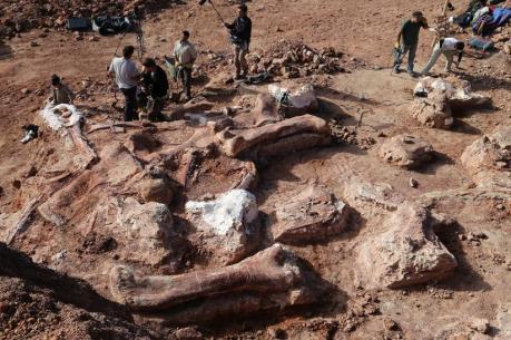 Tìm thấy hóa thạch chim khổng lồ cách đây 50 triệu năm