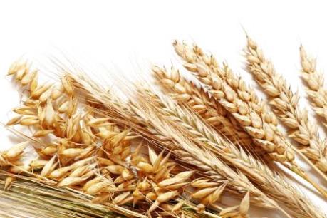 Nhìn lại thị trường nông sản Mỹ tuần qua