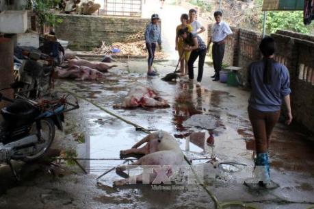Tp. Hồ Chí Minh chấm dứt cơ sở giết mổ gia súc thủ công trong năm 2017