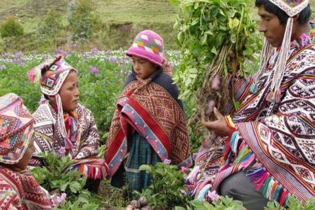 Trung Quốc tính toán rót 700 triệu USD vào ngành nông nghiệp Peru