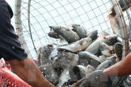 Cần kiểm soát chặt chất kháng sinh trong sản phẩm thủy sản
