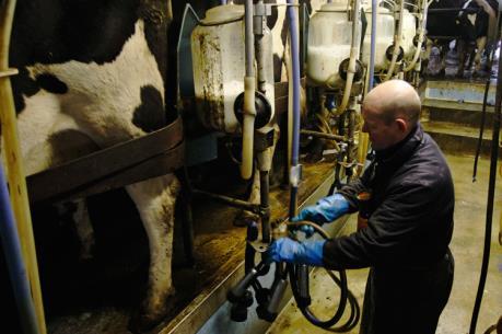 EU sẵn sàng hỗ trợ thêm ngành sản xuất sữa châu Âu
