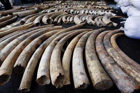 Mỹ cấm buôn bán ngà voi châu Phi