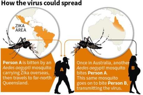 Australia: Phát hiện hai ca nghi nhiễm virus Zika tại bang Queensland