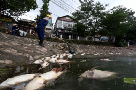 Vớt được 6 tấn cá chết ở hồ Hoàng Cầu, Hà Nội