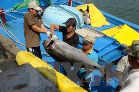 Xây dựng cơ chế hỗ trợ một lần cho đầu tư tàu cá xa bờ
