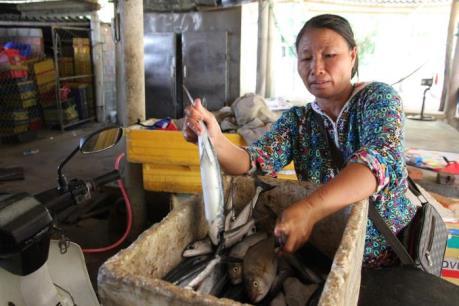 Chợ cá ế ẩm sau vụ cá nục nhiễm chất cực độc Phenol