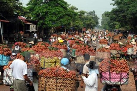 Tìm giải pháp xuất khẩu vải quả qua địa bàn Lạng Sơn