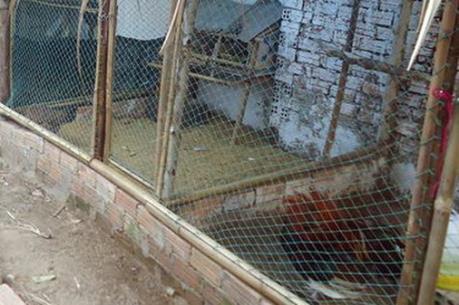 """Thông tin về vụ việc """"xây chuồng gà phải xin phép ở Cao Bằng"""""""