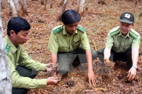 Thông tin cháy lớn rừng tràm U Minh Hạ, Cà Mau là không chính xác